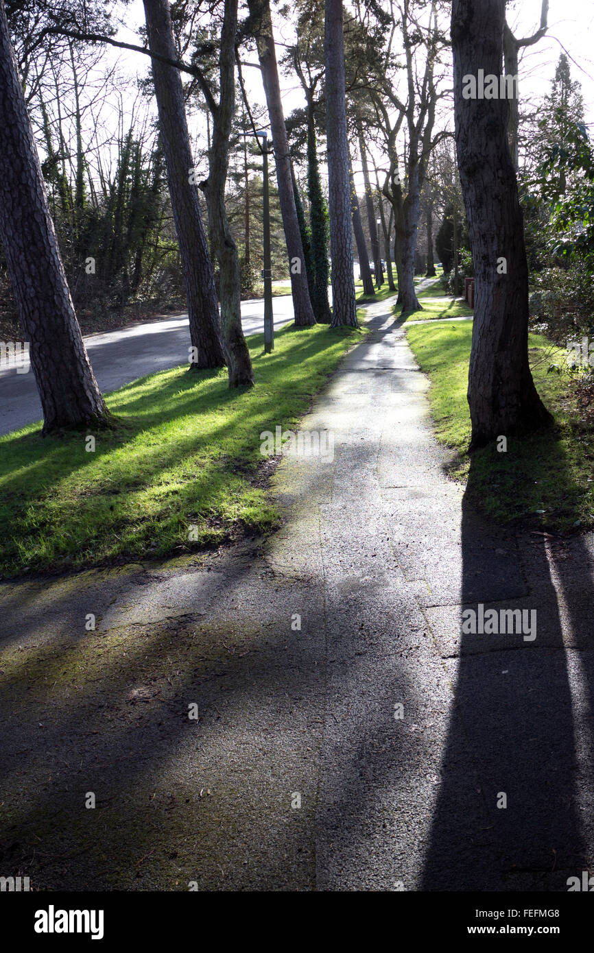 Trees and shadows by an urban footpath - Stock Image