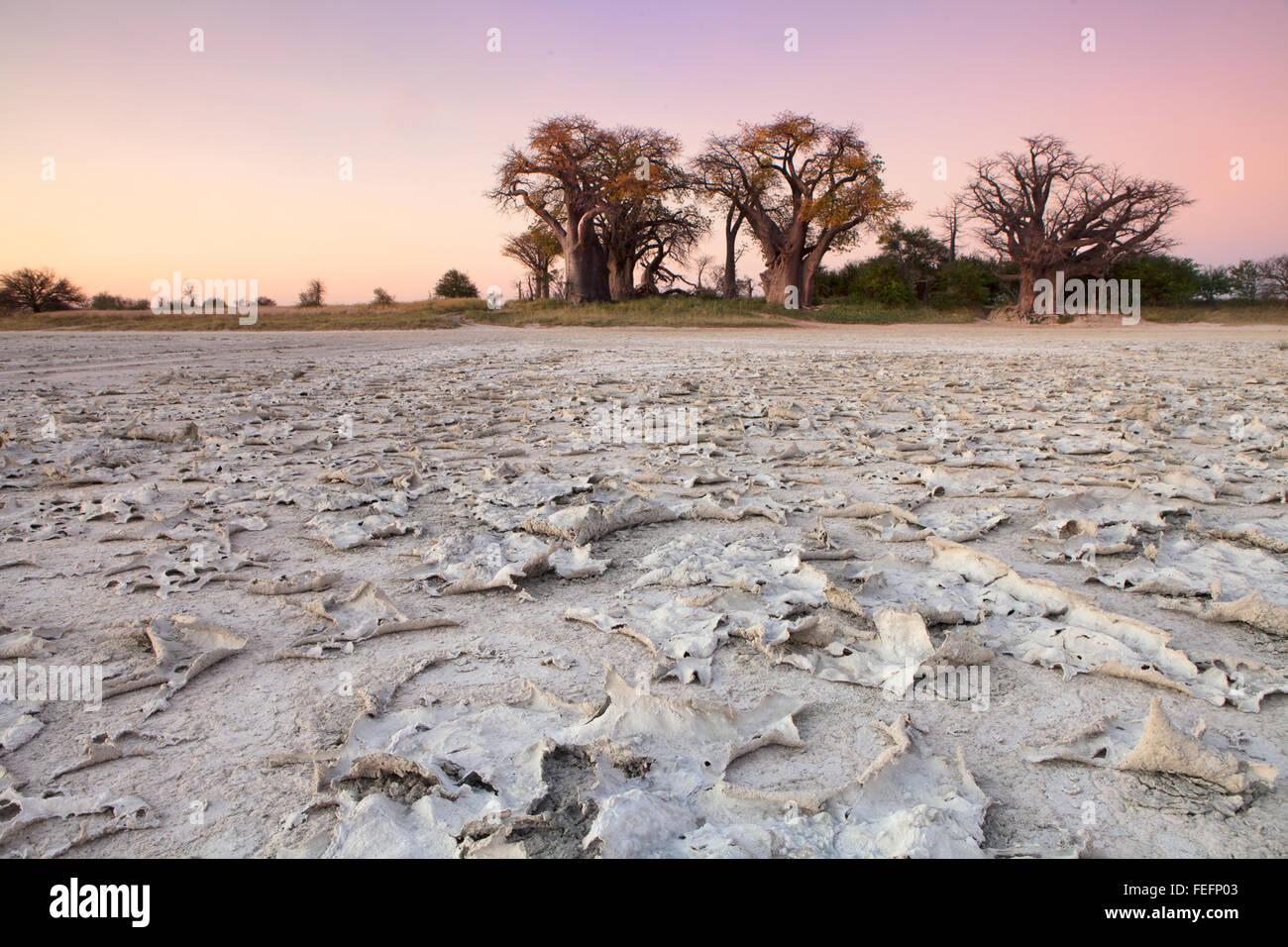 Baines Baobabs in Botswana - Stock Image