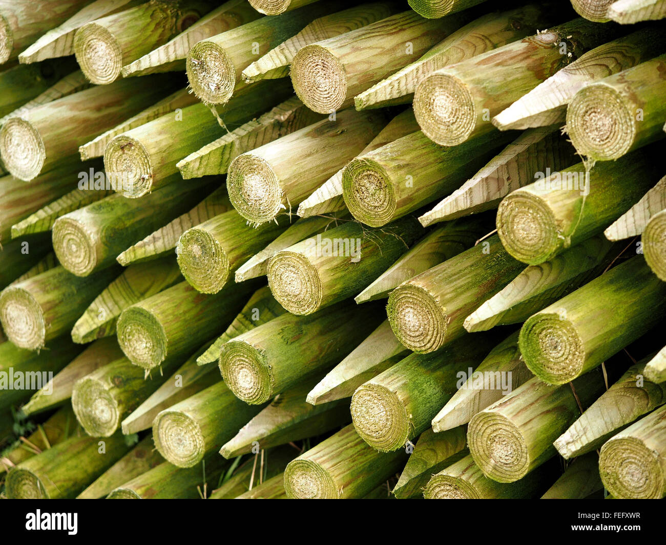 pattern of wooden fenceposts stacked end to end with green mossy tinge of lichenStock Photo