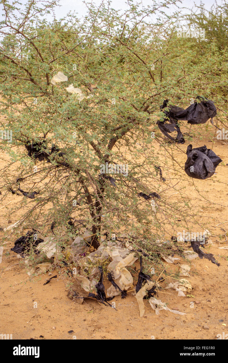 Niamey, Niger.  Non-biodegradable Plastic Bags Caught on Thorns of a Young Acacia Tree. - Stock Image