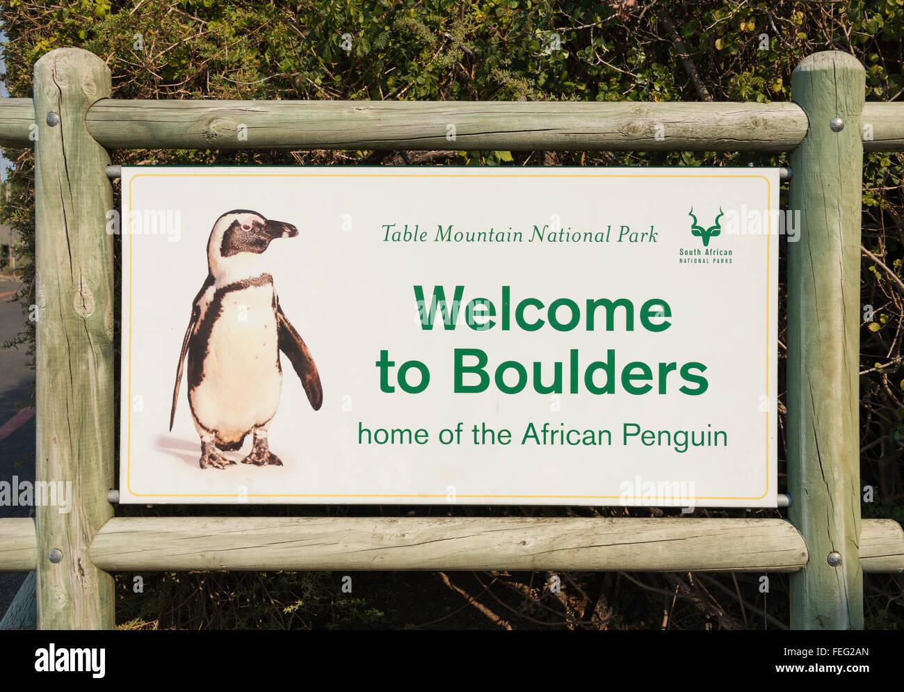 Simon S Town Penguins Boulders Beach