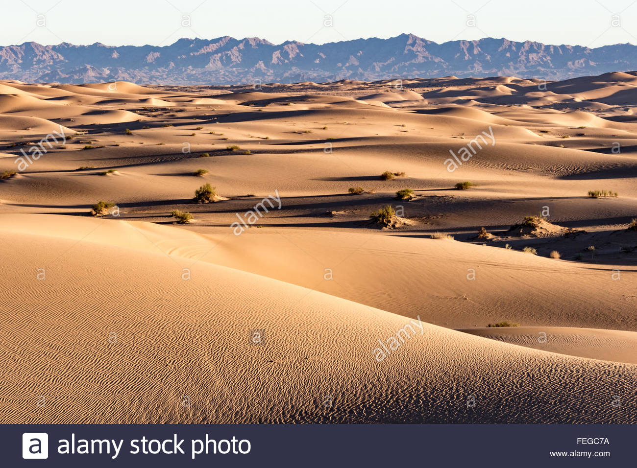 Sand dunes with sparse vegetation expand almost to the horizon before meeting the Chocolate Mountains of California - Stock Image