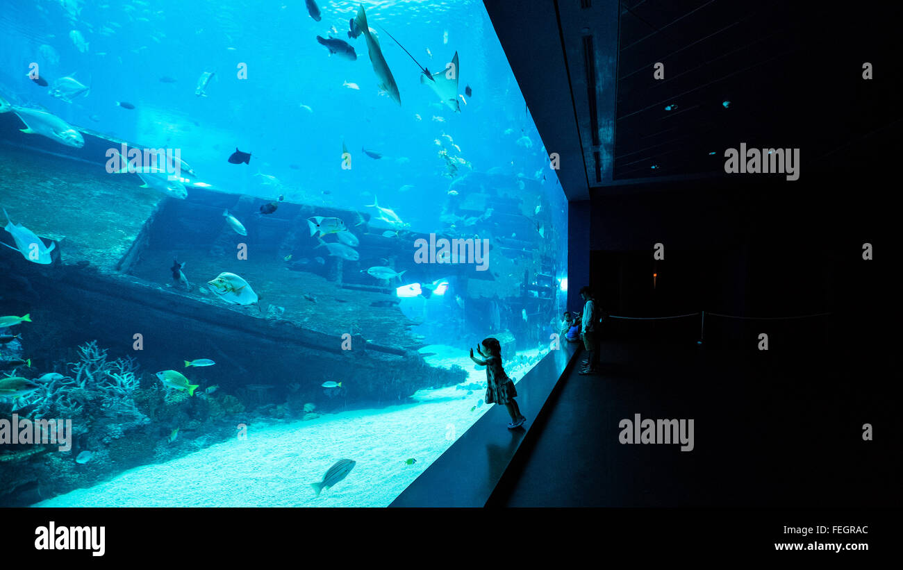 S.E.A. Aquarium in Singapore - Stock Image