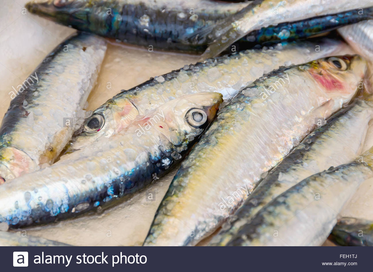Fresh anchovies.Pile of frozen fish. Close-up. From above - Stock Image