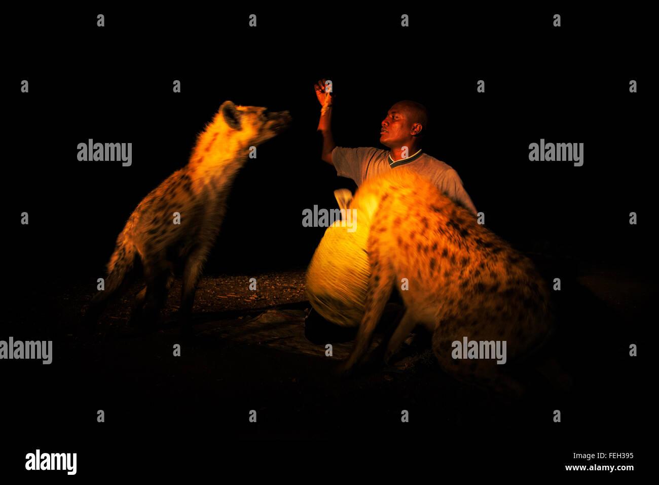 Hyena man Harar, Ethiopia. - Stock Image