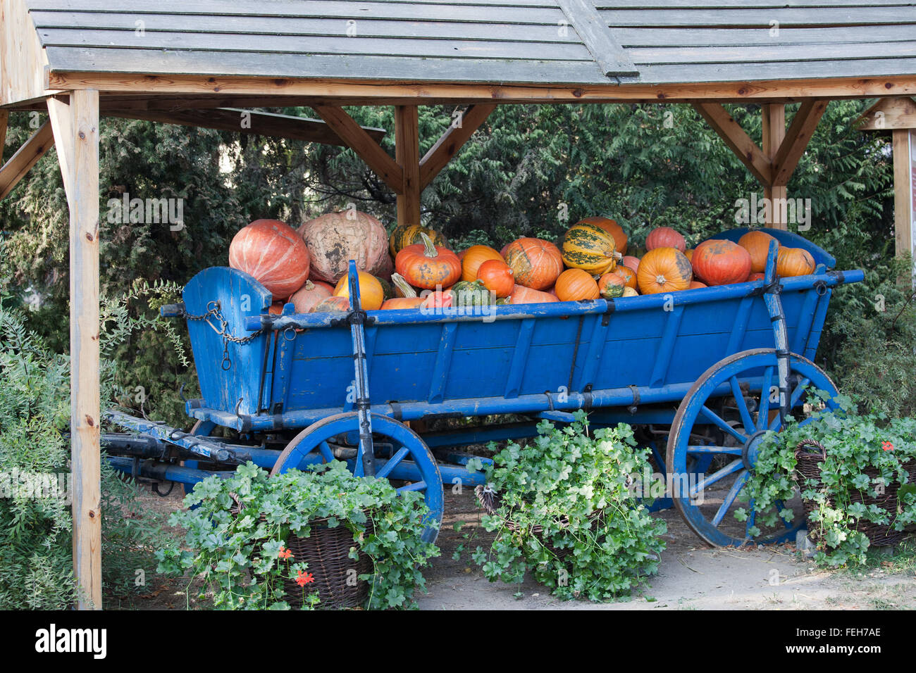 Pumpkins of different kinds on a blue traditional wagon under a roof as display in Wroclaw Zoo, Poland Stock Photo
