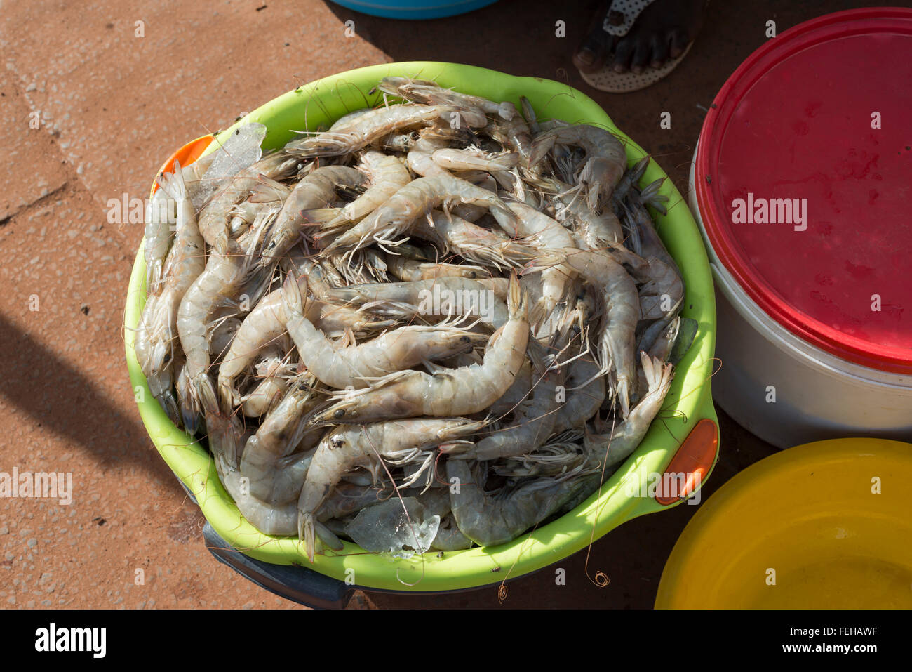Shrimps on sale at a market in the guinea bissau capital city of shrimps on sale at a market in the guinea bissau capital city of bissau publicscrutiny Image collections