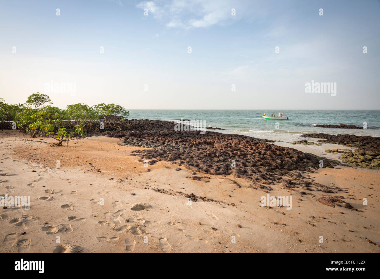 Mangroves growing on volcanic rock near the shore of the island Poilao in the Bijagos Islands of Guinea Bissau - Stock Image