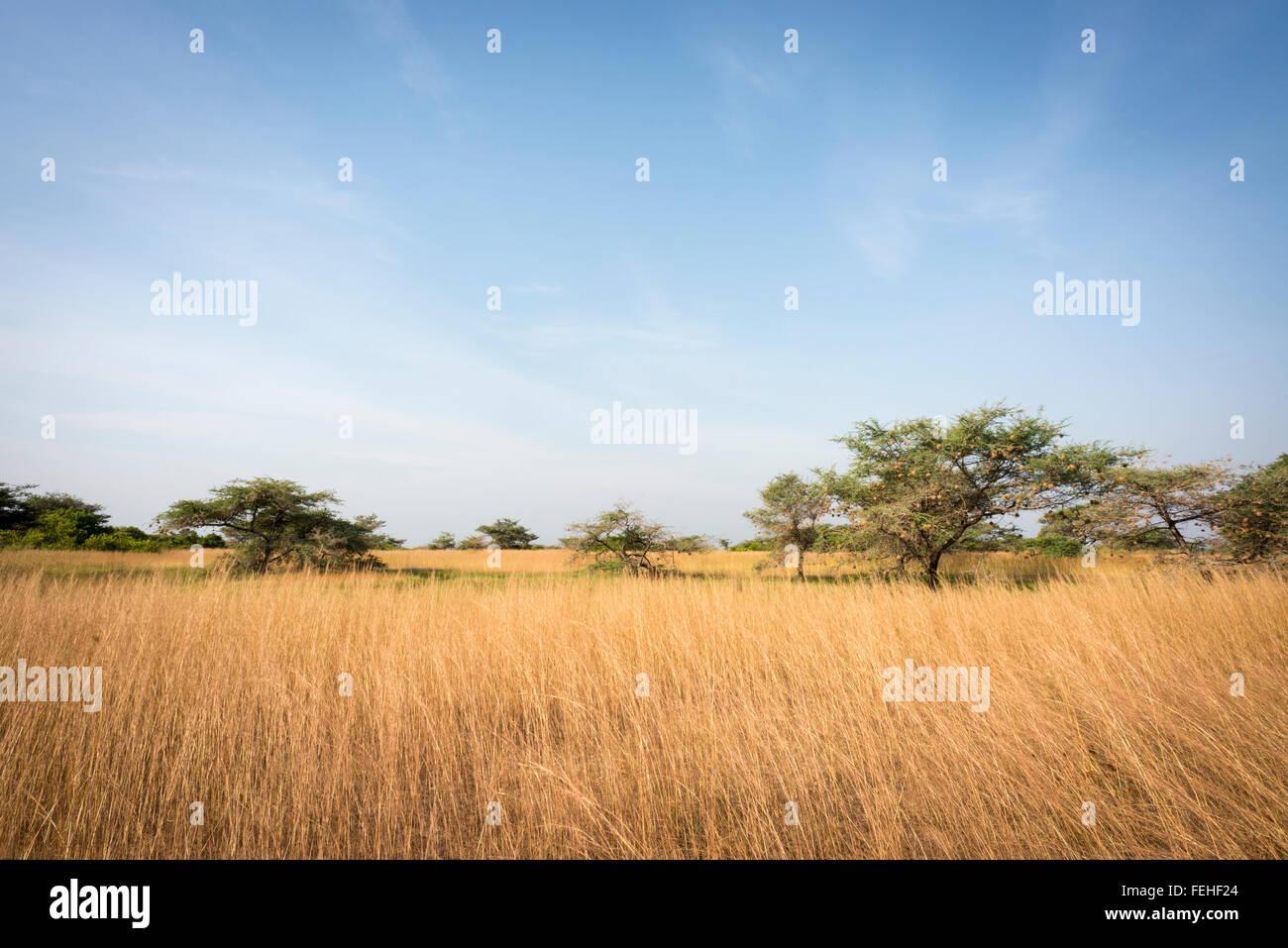 The savannah in Orango in the Bijagos Archipelago of Guinea Bissau - Stock Image