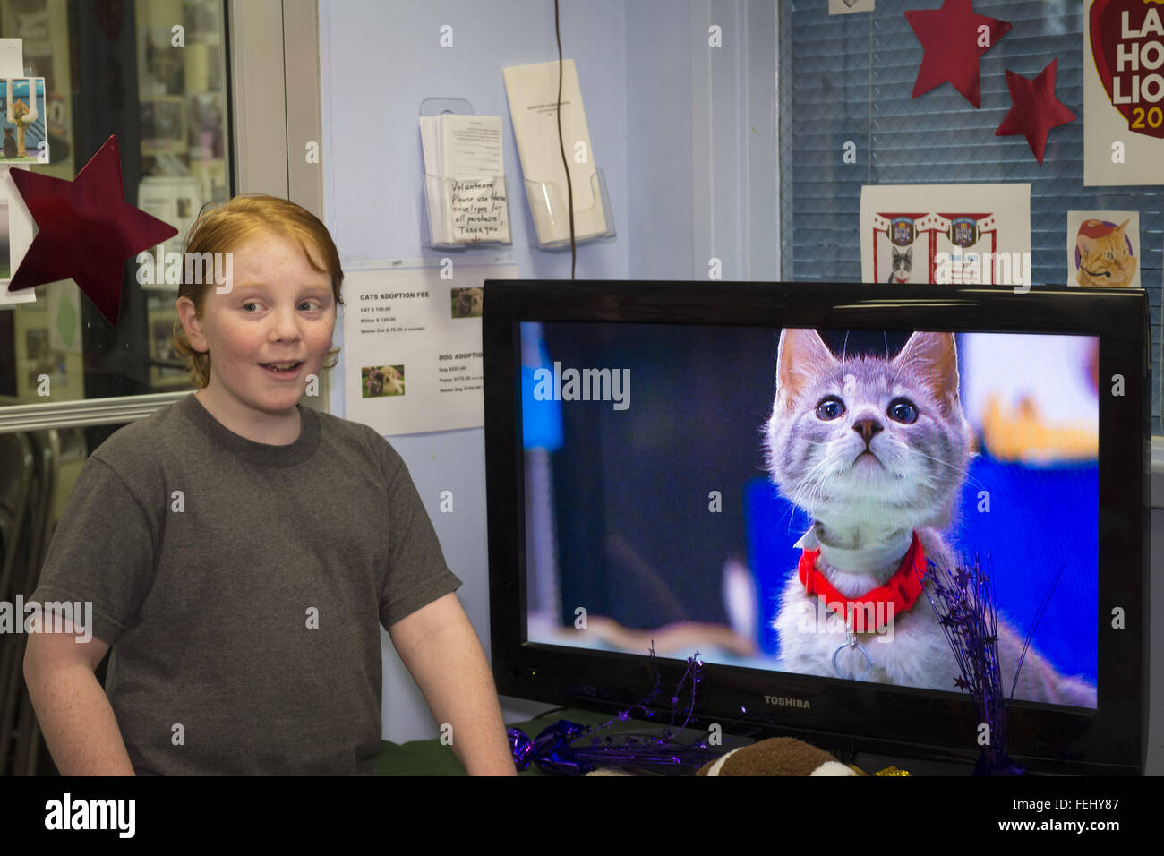 Wantagh, New York, USA. 7th Feb, 2016. MIKE DAY, 13, of Wantagh, watches Hallmark Channel Kitten Bowl III, at Last - Stock Image