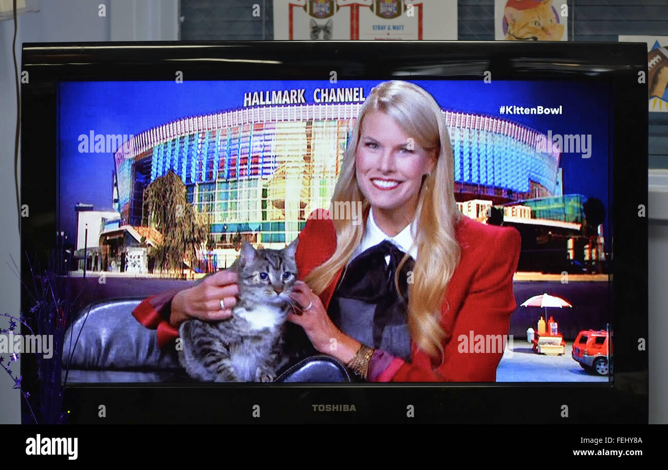 Wantagh, New York, USA. 7th Feb, 2016. Host BETH STERN is holding tabby cat ALEXANDER, the Mayor of Last Hope Rescue, - Stock Image