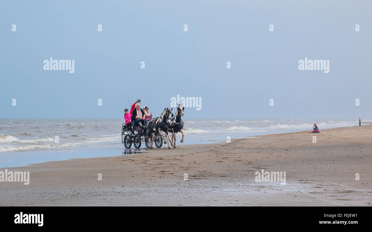 Netherlands, South Holland, Noordwijk, fun horse-drwan carriage rides on Langevelderslag Beach - Stock Image