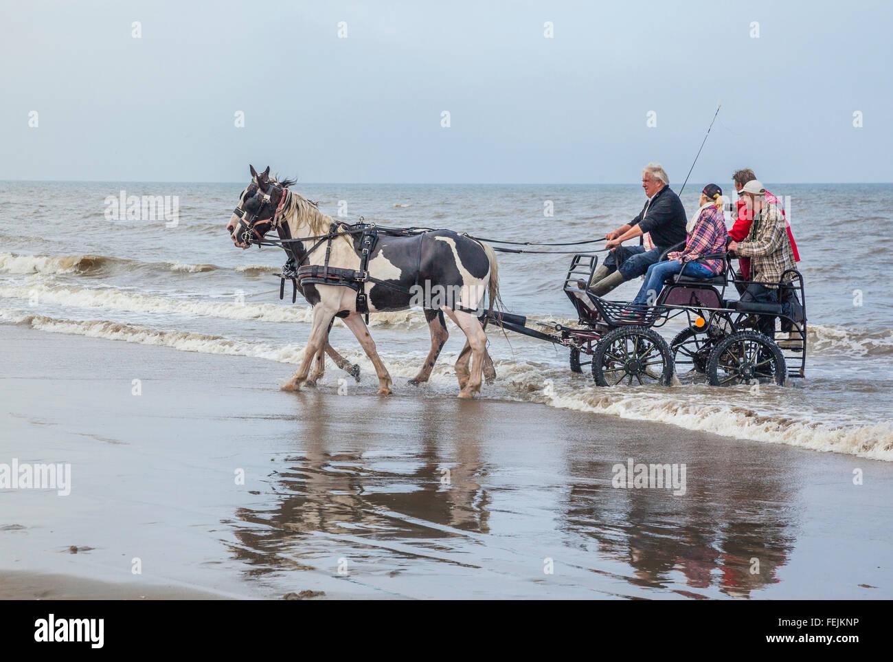 Netherlands, South Holland, Noordwijk, fun horse-drwan carriage rides in the surf of Langevelderslag Beach - Stock Image