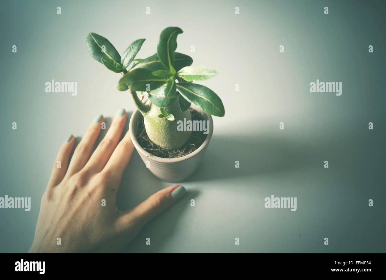 Elevated View Of Woman's Hand And Potted Plant - Stock Image