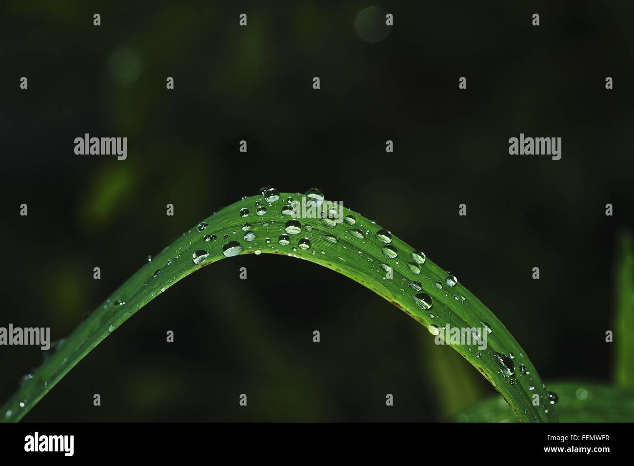 Close-Up Of Raindrops On Blade Of Grass - Stock Image