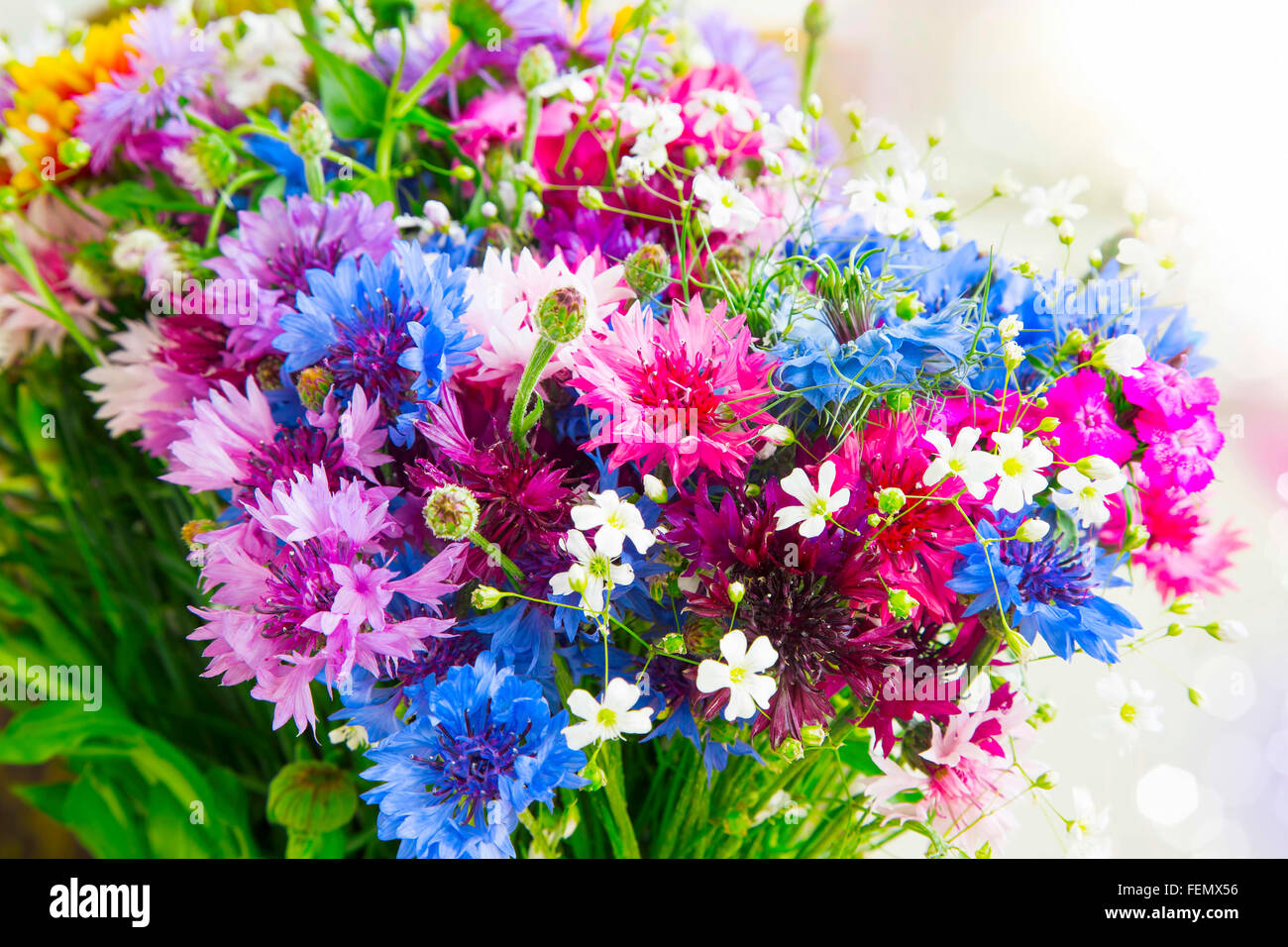 Spring bouquet with colorful scent flowers - Stock Image