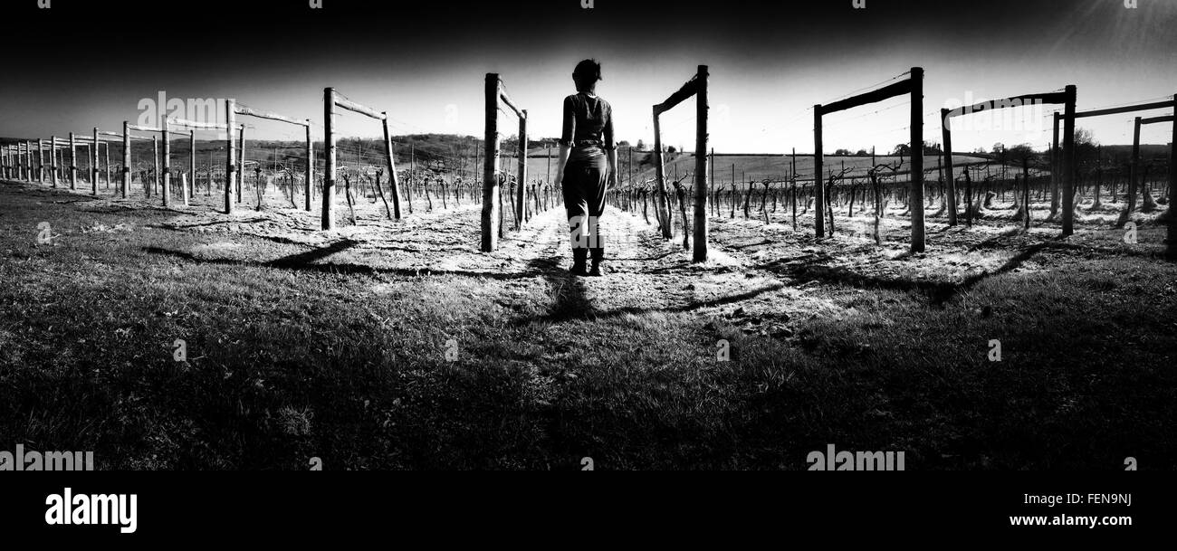 Rear View Of Woman On Vine Fields - Stock Image