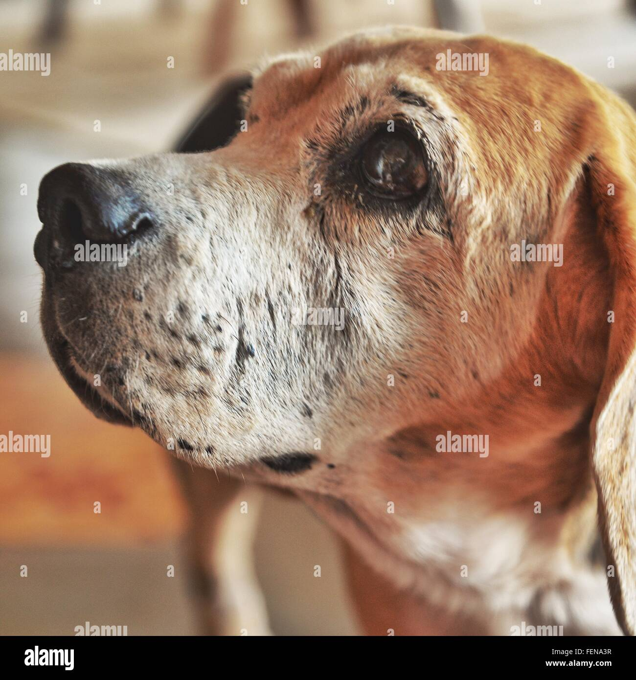 Close-Up Of Dog - Stock Image