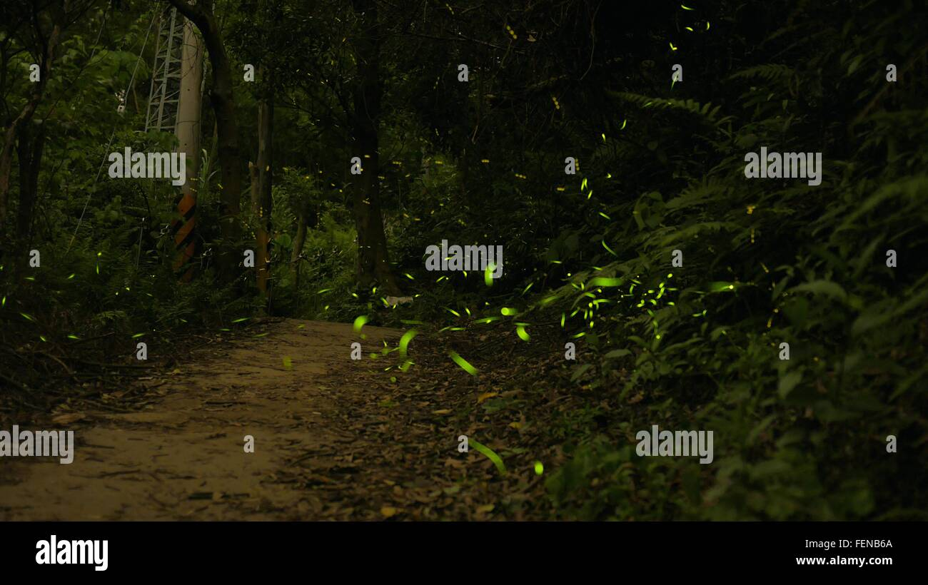 Illuminated Fireflies Flying On Dirt Road In Woodland - Stock Image