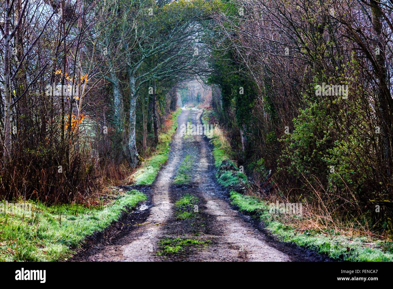 Bare Trees Along Dirt Road - Stock Image