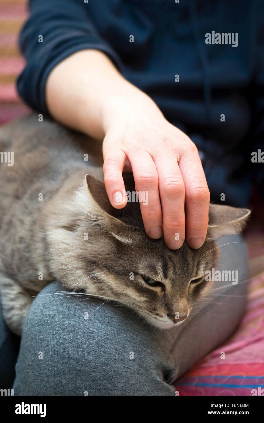 Woman caressing her cat at home Stock Photo