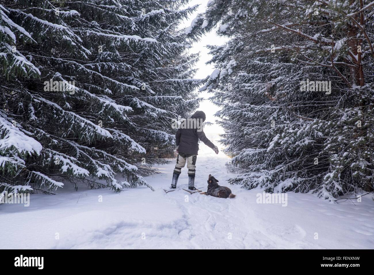 Rear view of man and obedient dog in snow covered forest, Ural, Russia - Stock Image