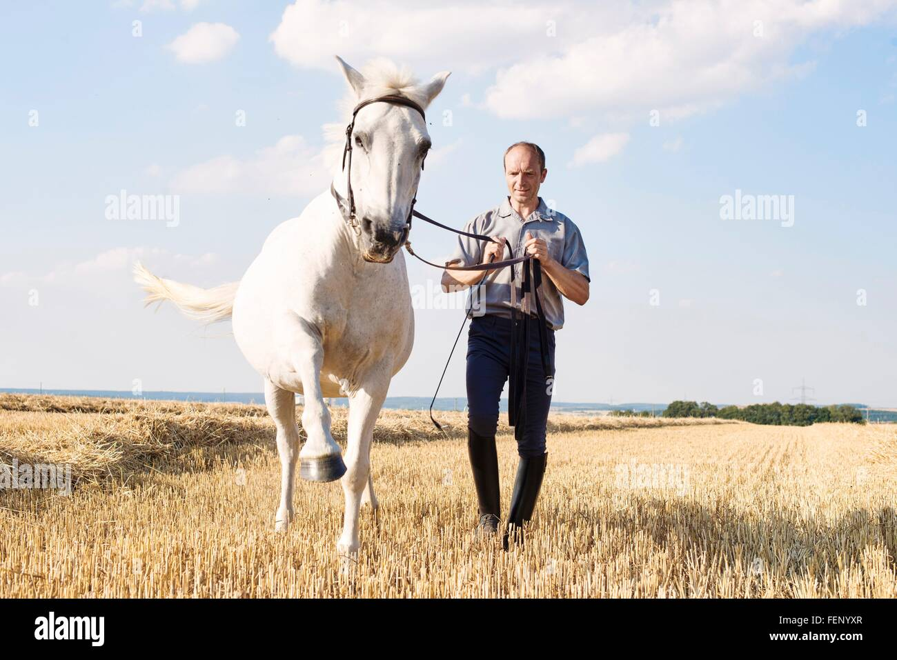 Man training trotting white horse in field - Stock Image