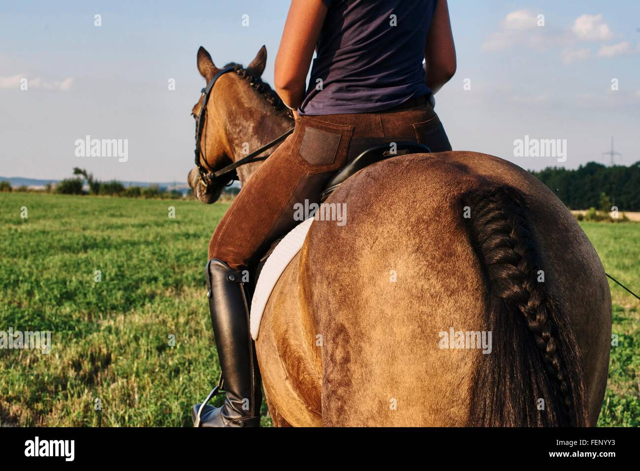 Rear view of woman riding bay horse in field - Stock Image