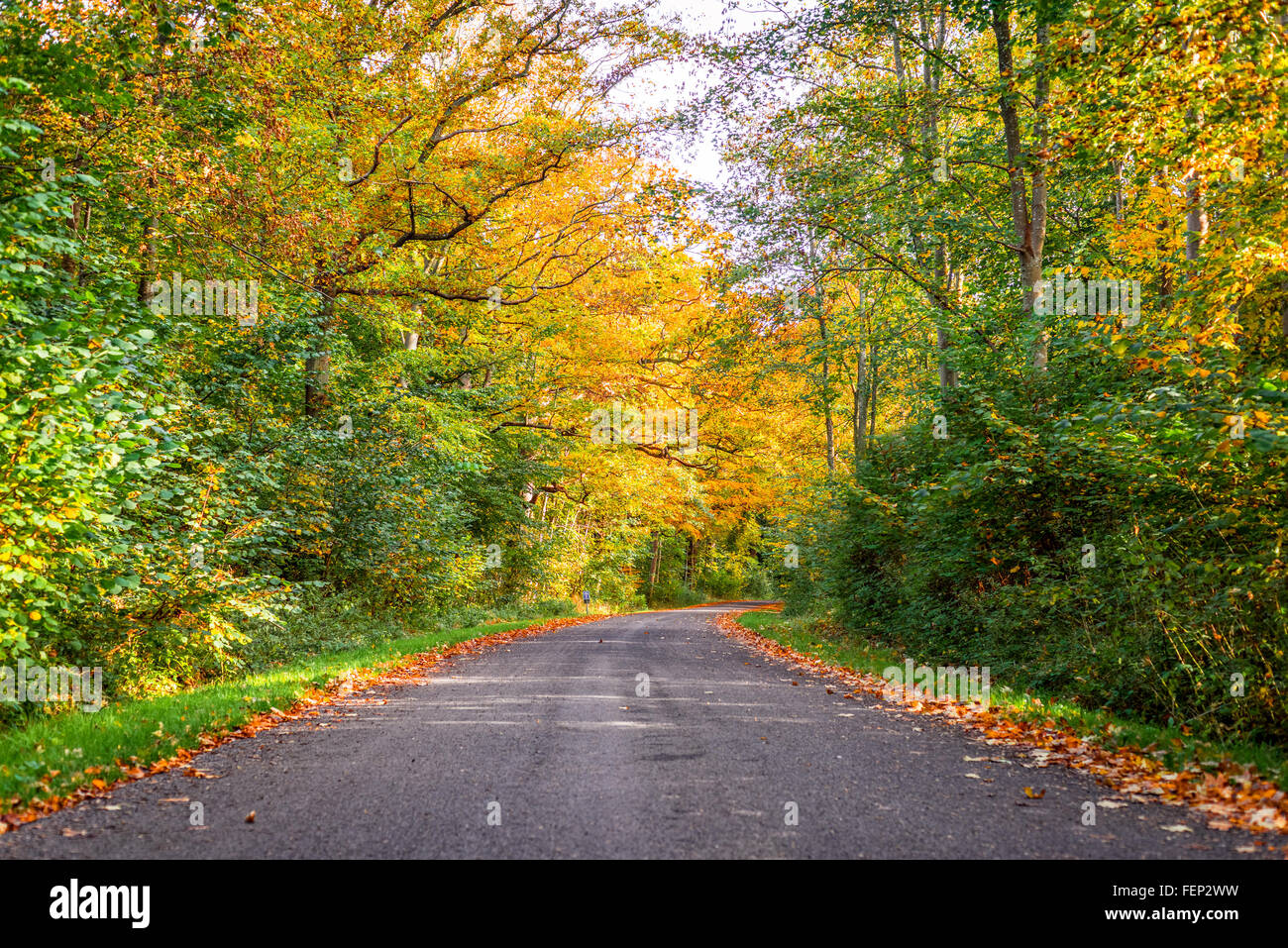 Forest road surrounded by colorful trees in the fall Stock Photo ...