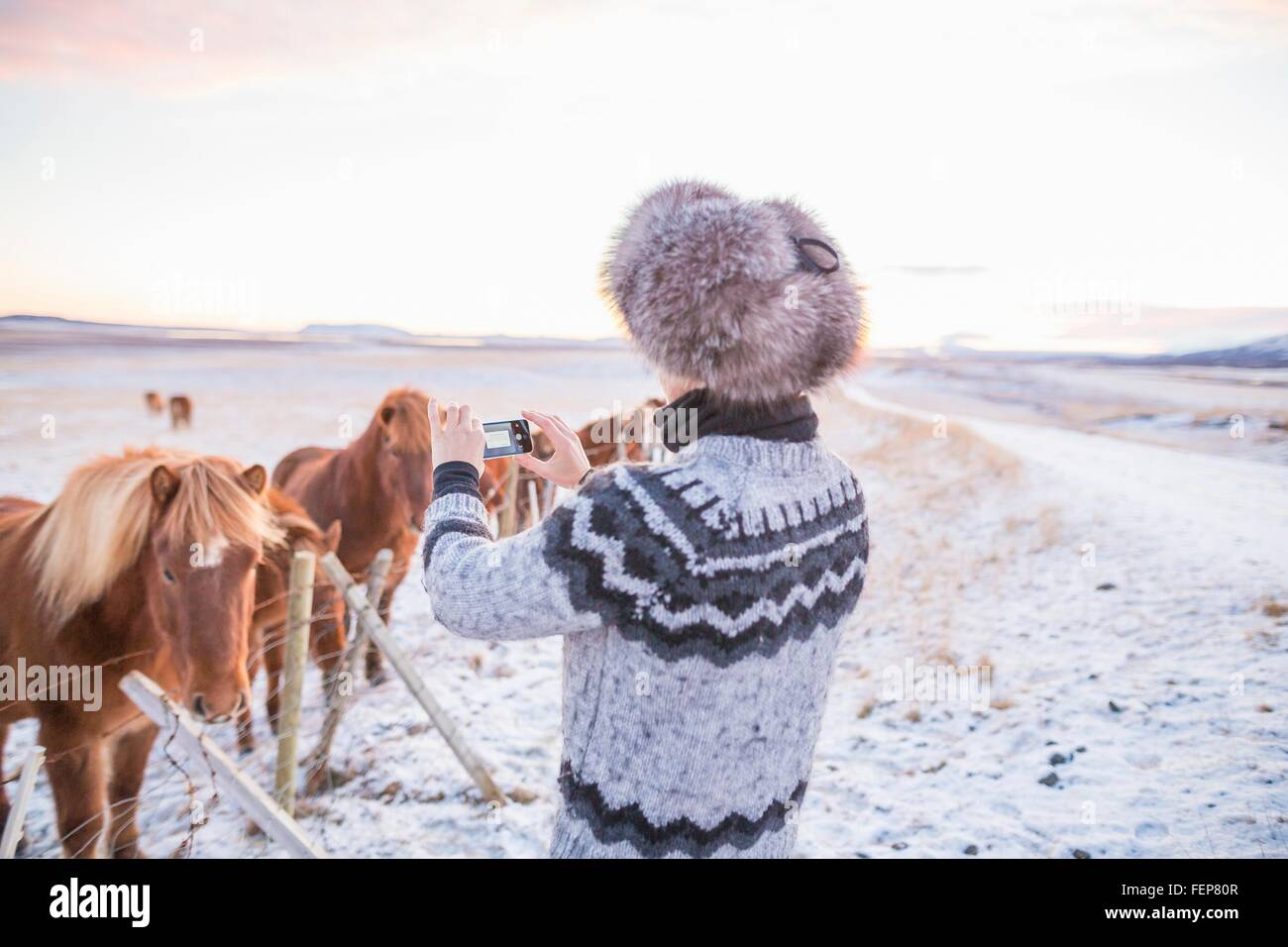 Woman taking photograph of ponies on snow-covered field, Iceland Stock Photo