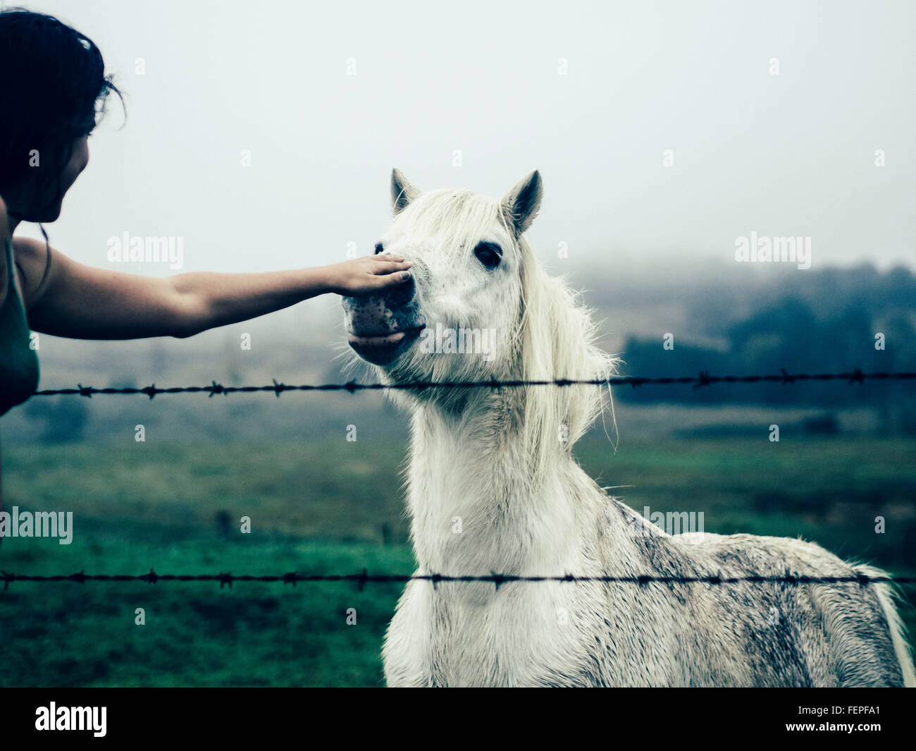 Cropped Hand Touching White Horse In Ranch Against Sky Stock Photo