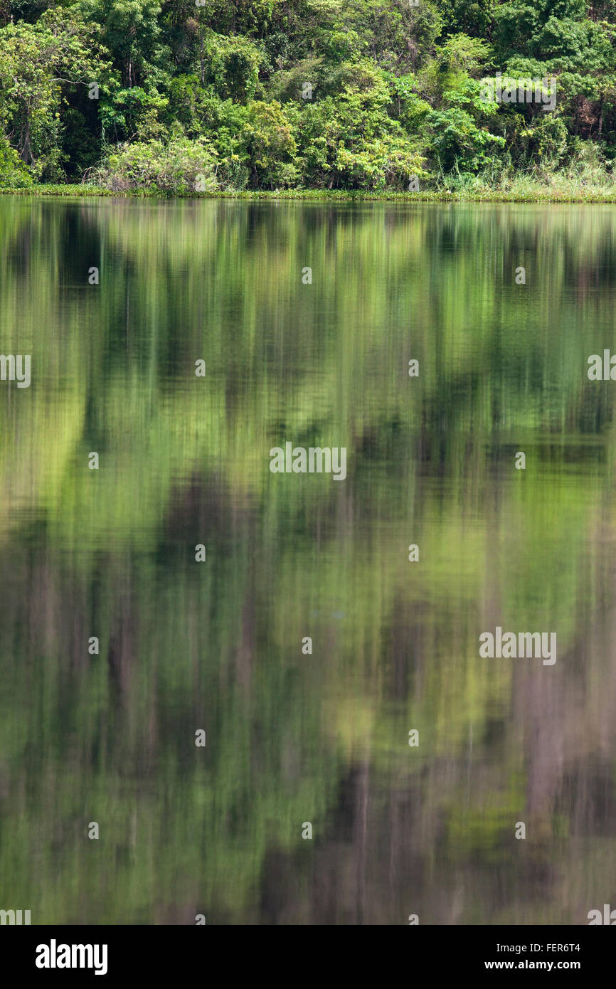 Dry Tropical Forest and reflections in waters of Lac Ravelobe. Ankarafantsika. National Park. North west Madagascar. - Stock Image