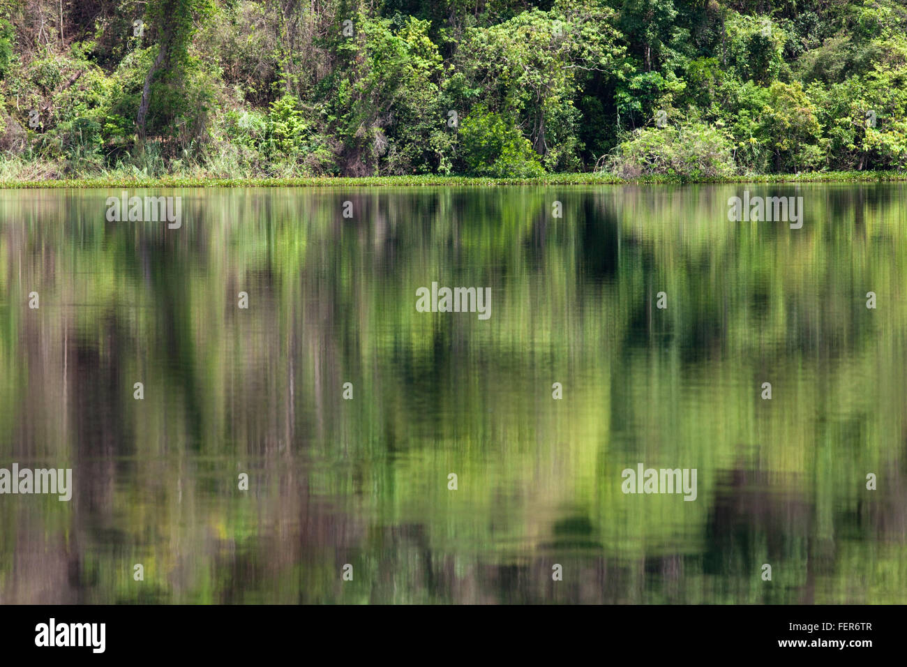 Dry Tropical Forest and reflections in surface waters of Lac Ravelobe. Ankarafantsika. National Park. North west - Stock Image