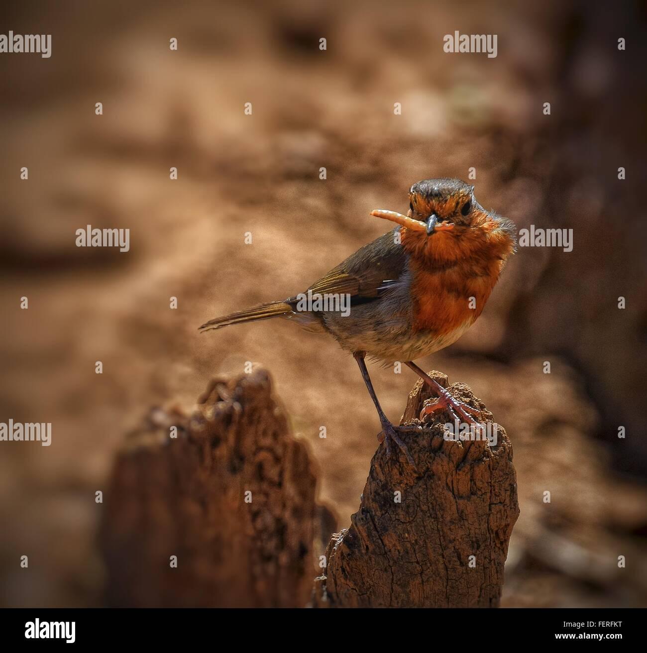Bird Perching On Tree Trunk - Stock Image