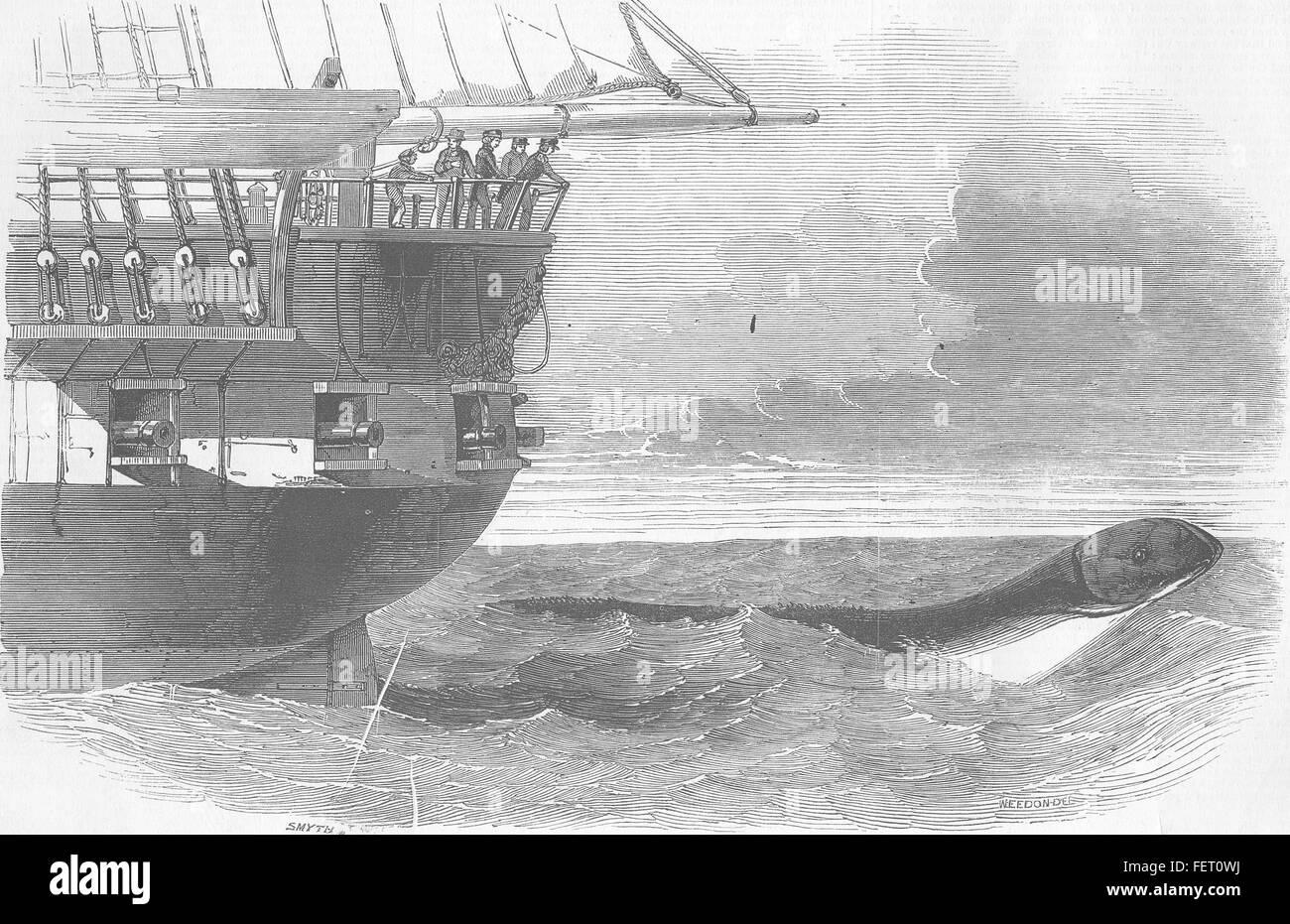 ANIMALS Sea-Serpent passing below Daedalus 1848. Illustrated London News - Stock Image