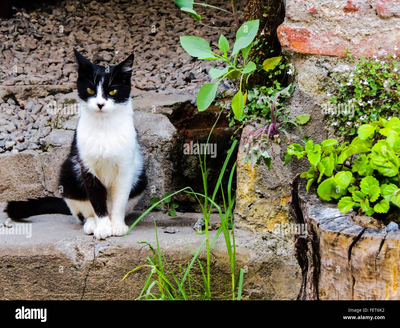 Portrait Of Angry Cat Sitting By Building - Stock Image