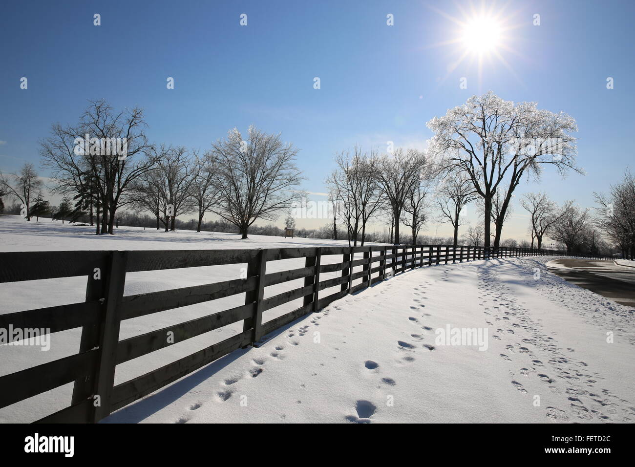 sunny day on a cold winter day glimmering on the ice covered trees - Stock Image
