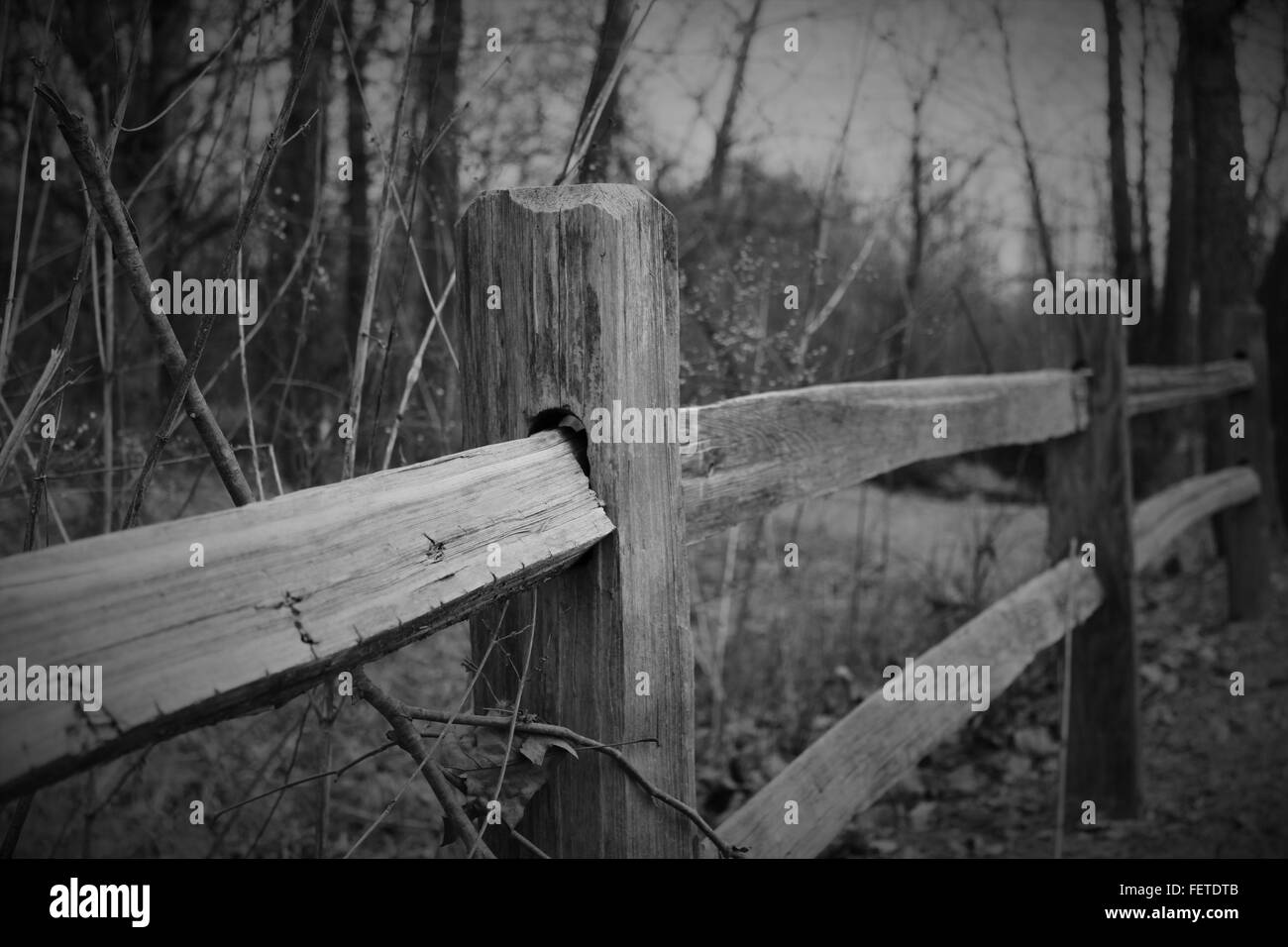 Old wood post fence line - Stock Image