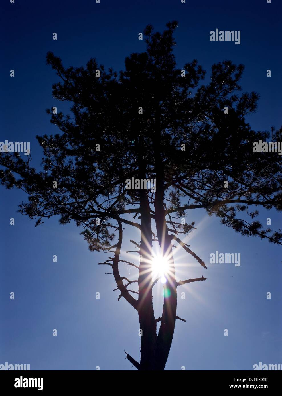 Low Angle View Of Tree At Sunrise - Stock Image