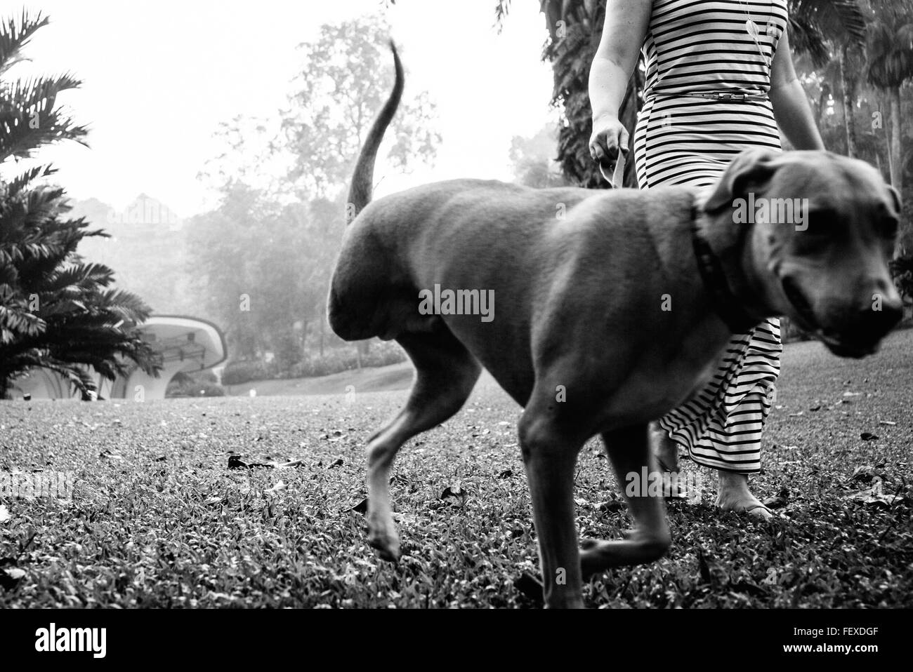 Low Section Of Woman With Dog Walking In Park - Stock Image