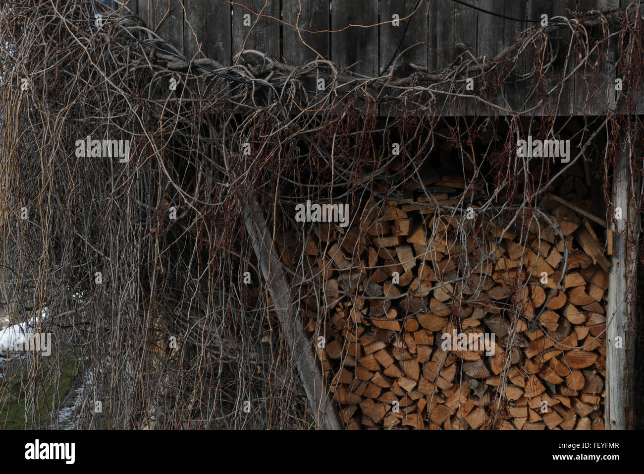 Stack Of Logs Surrounded By Dead Plants - Stock Image