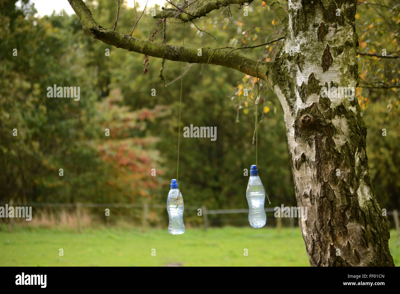 tree in pasture in Limburg with water bottles hanging from lowest branch - Stock Image
