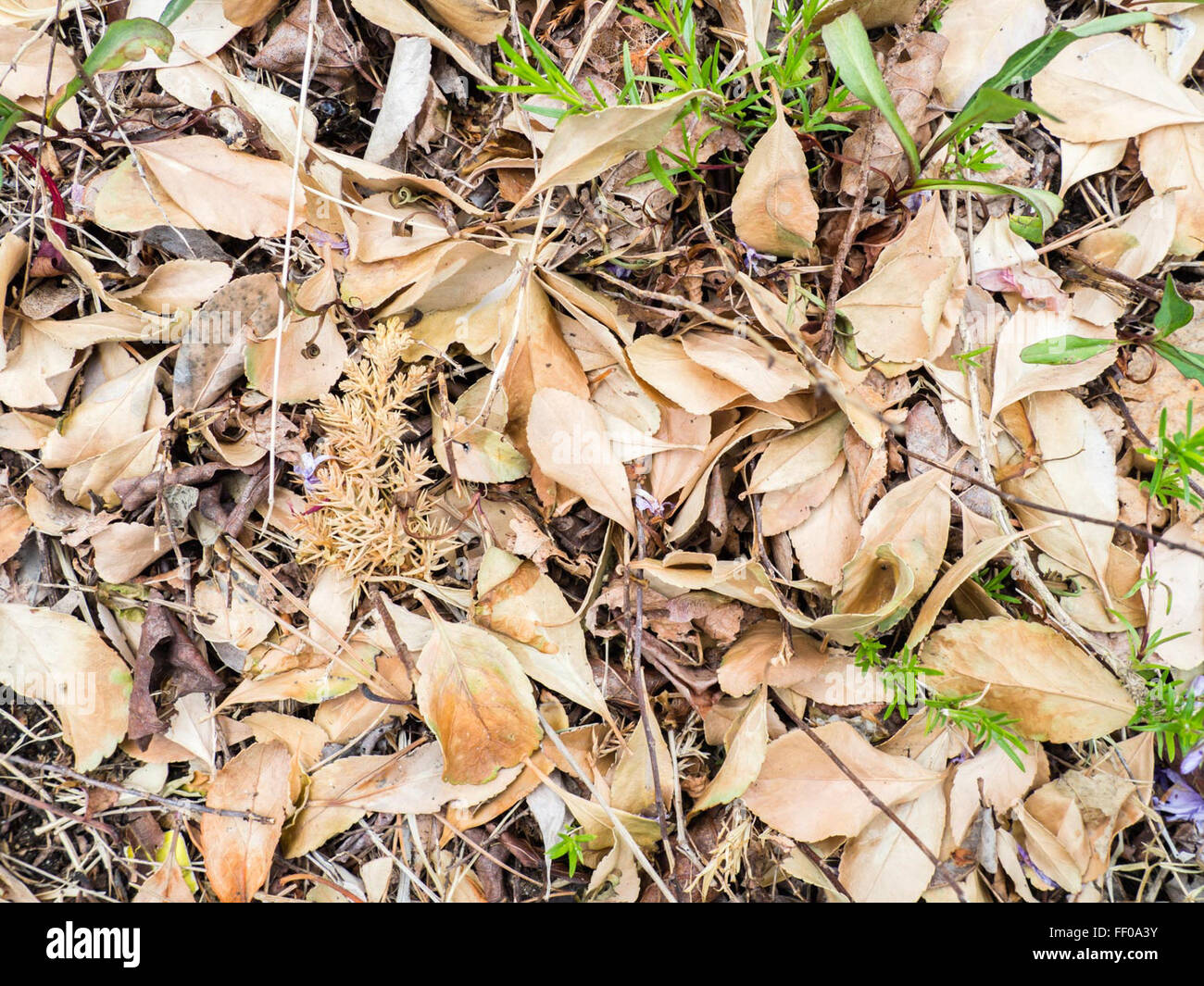Dry Leaves and Twigs on Ground Dry Leaves and Twigs on