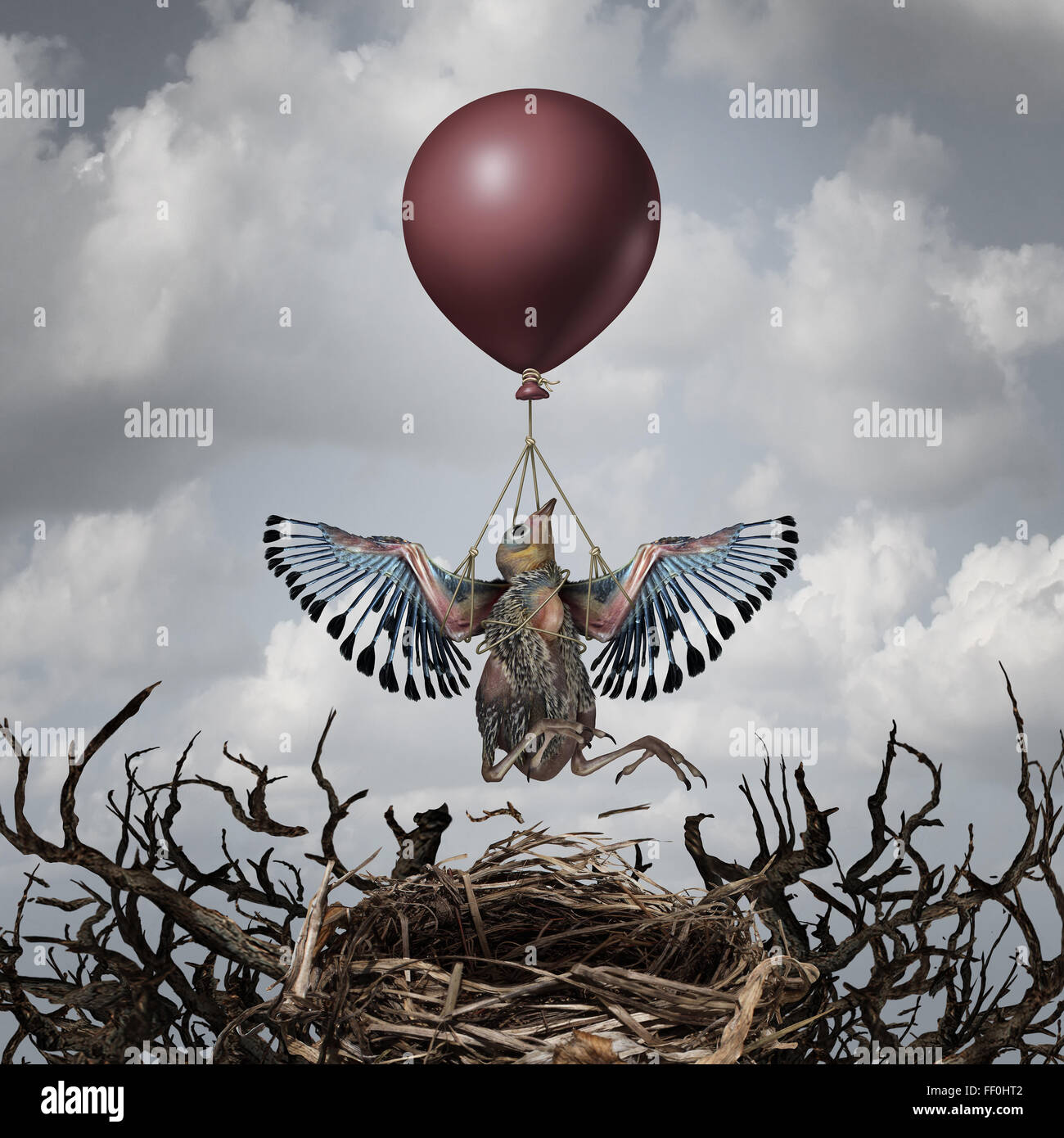 Helping support concept and early assistance metaphor as a baby bird being lifted up to the sky by a balloon as - Stock Image