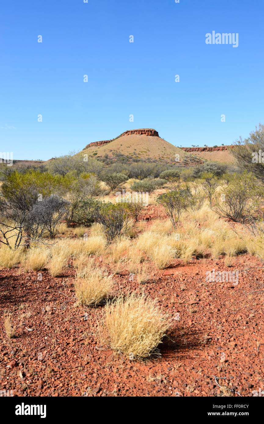 Bush near Alice Springs, Northern Territory, Australia - Stock Image