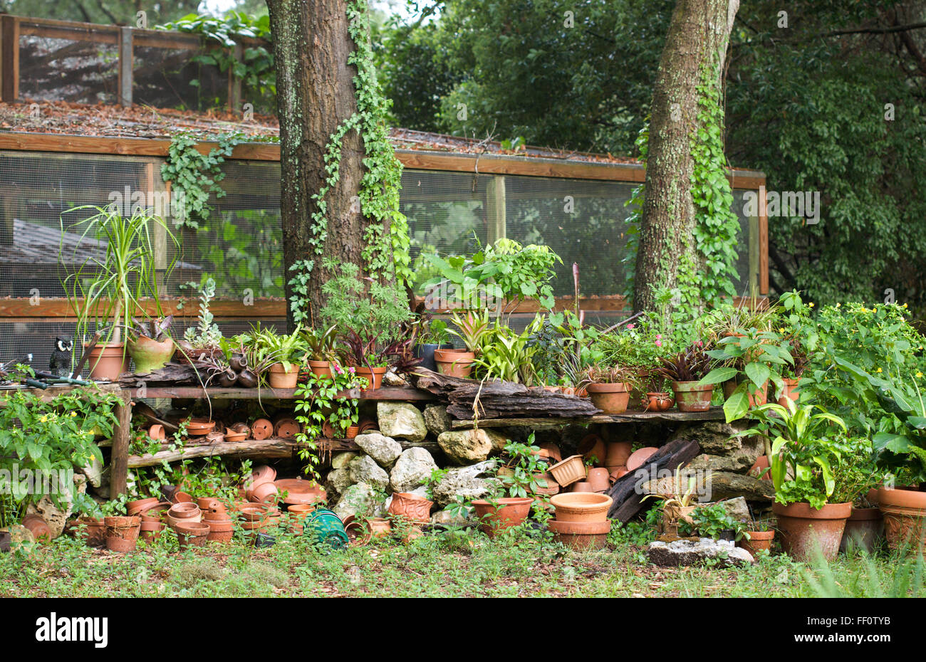 A shelf of terra cotta pots in a lush overgrown outdoor storage area. - Stock Image