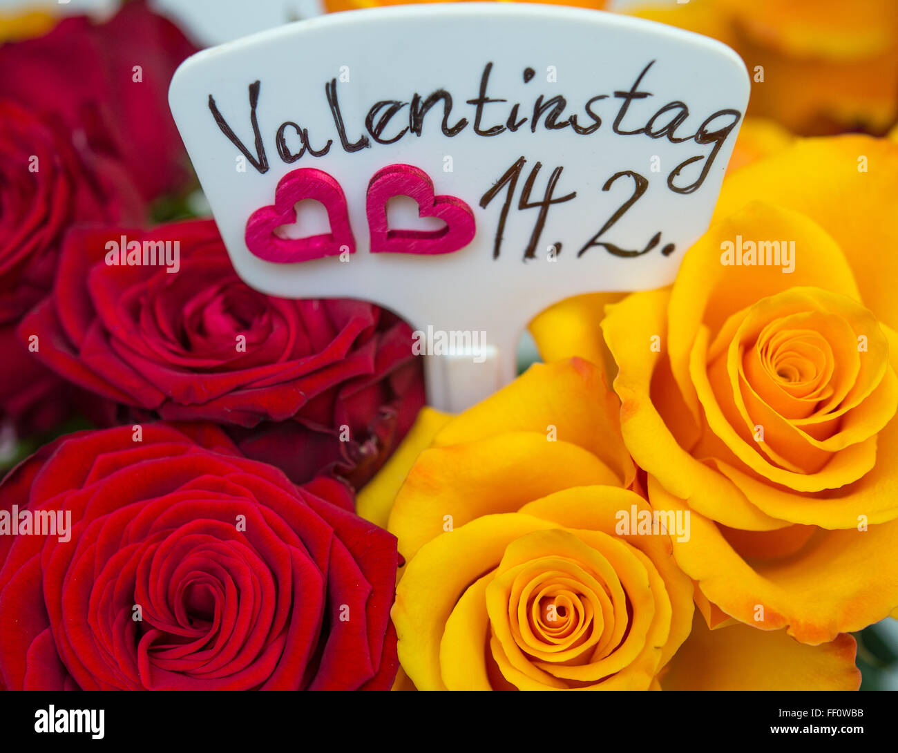8th feb 2016 valentines day 142 is written on a small sign inbetween roses in a florist in manchschnow germany 8 february 2016