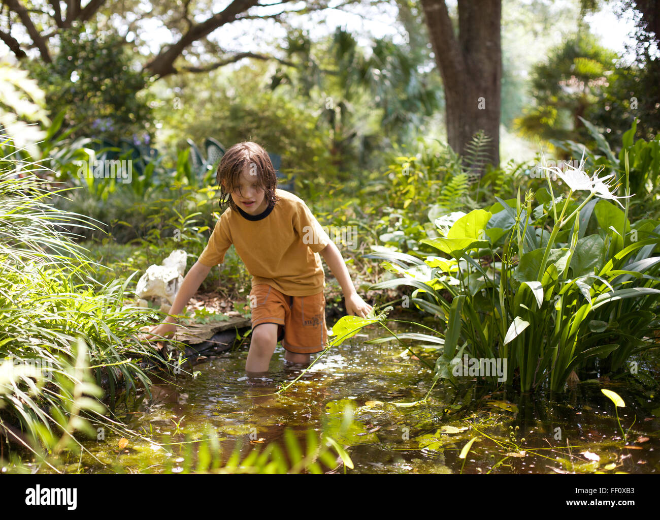 A boy wades knee deep in a small pond in a lush green setting. - Stock Image