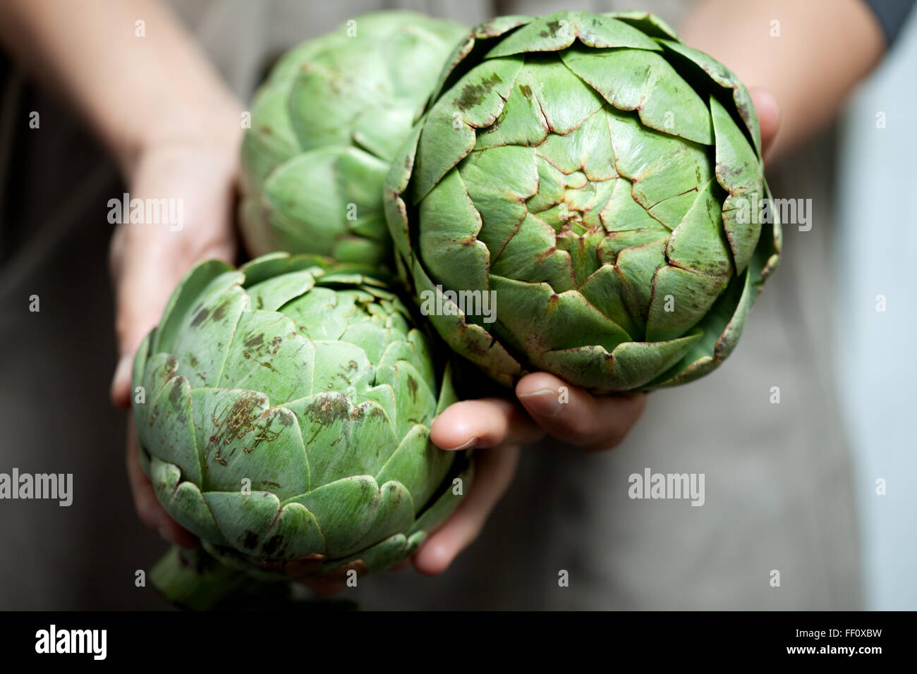 A woman holding three artichokes against a brown and gray apron. - Stock Image
