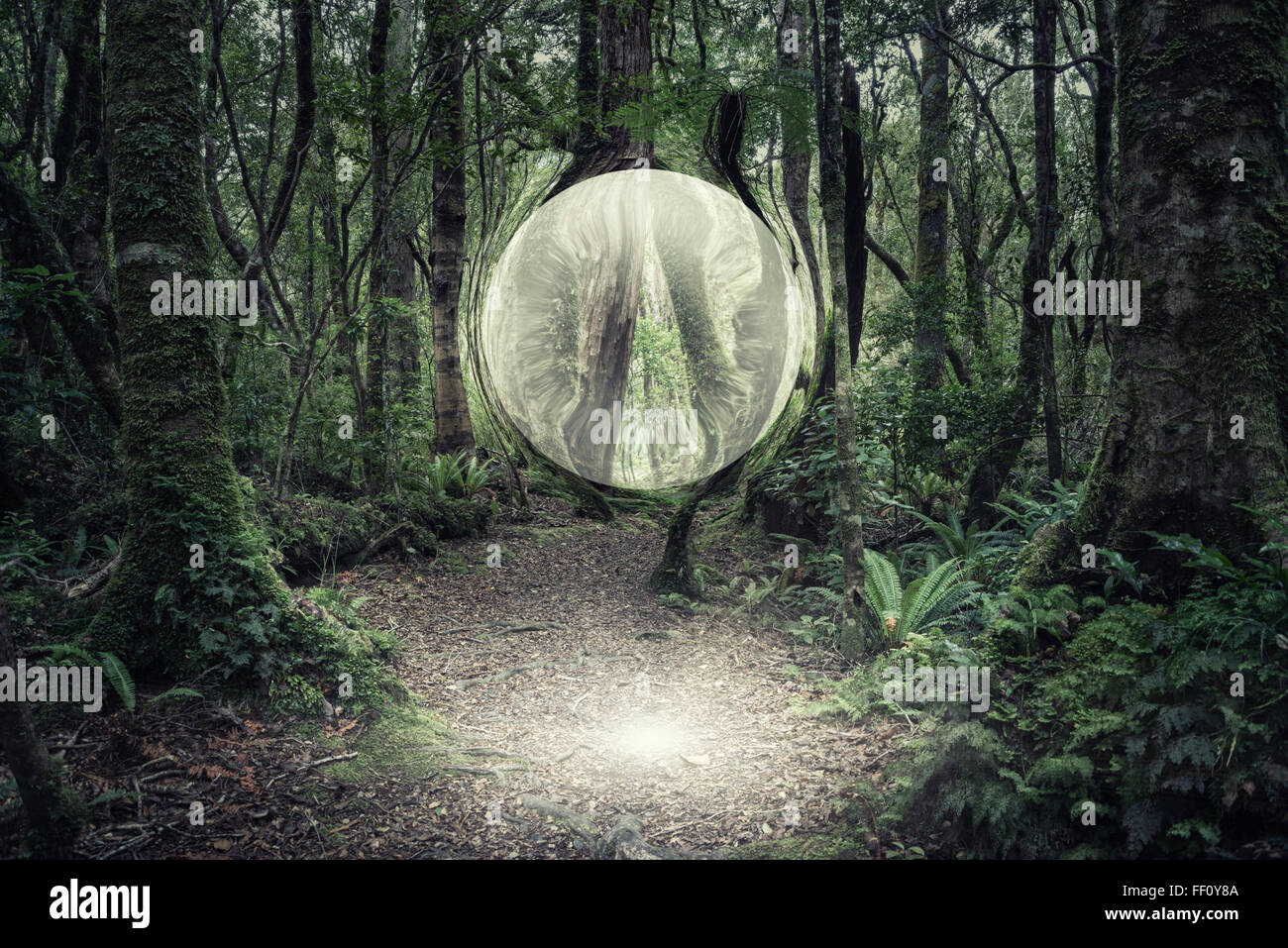 Orb glowing in forest Stock Photo
